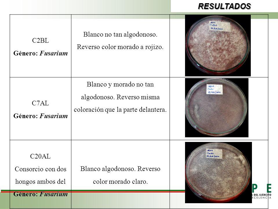 RESULTADOS C2BL Género: Fusarium