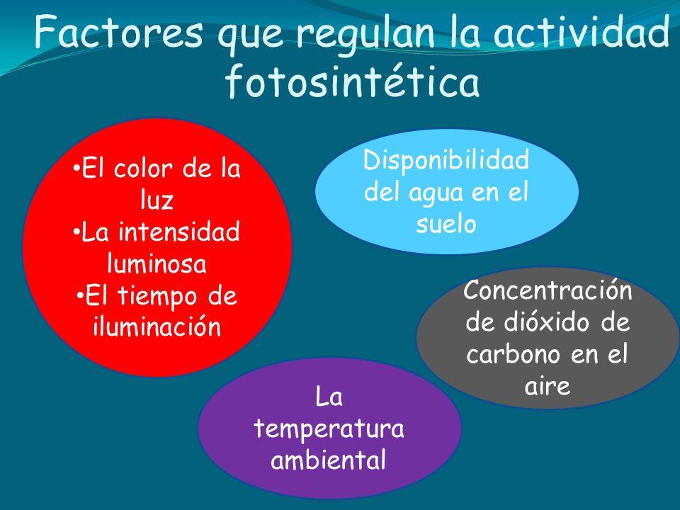 Factores que regulan la actividad fotosintética