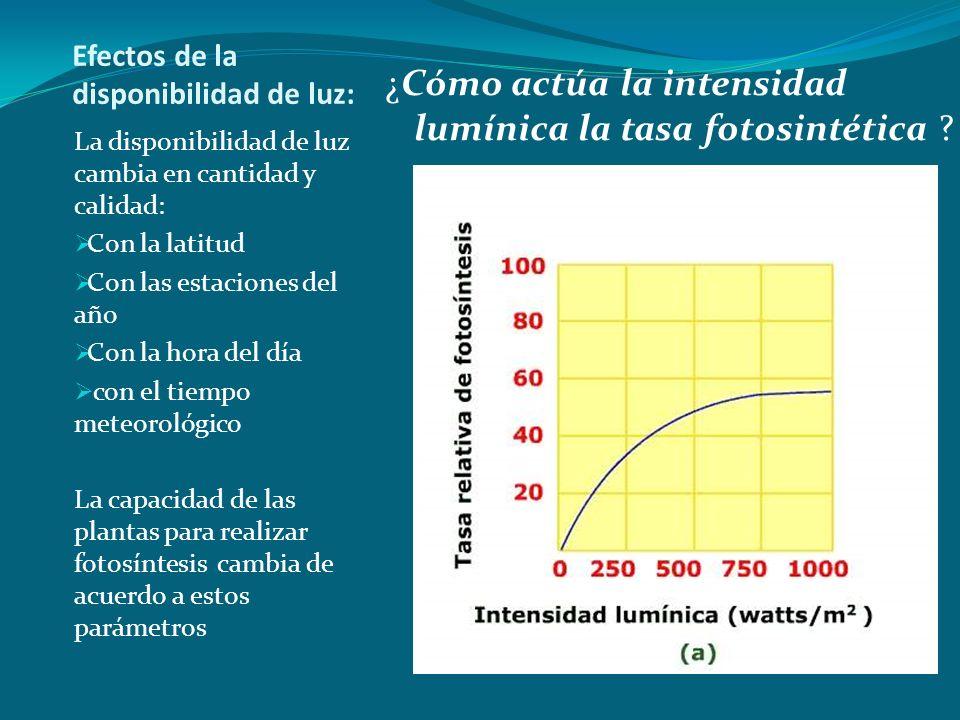 Efectos de la disponibilidad de luz: