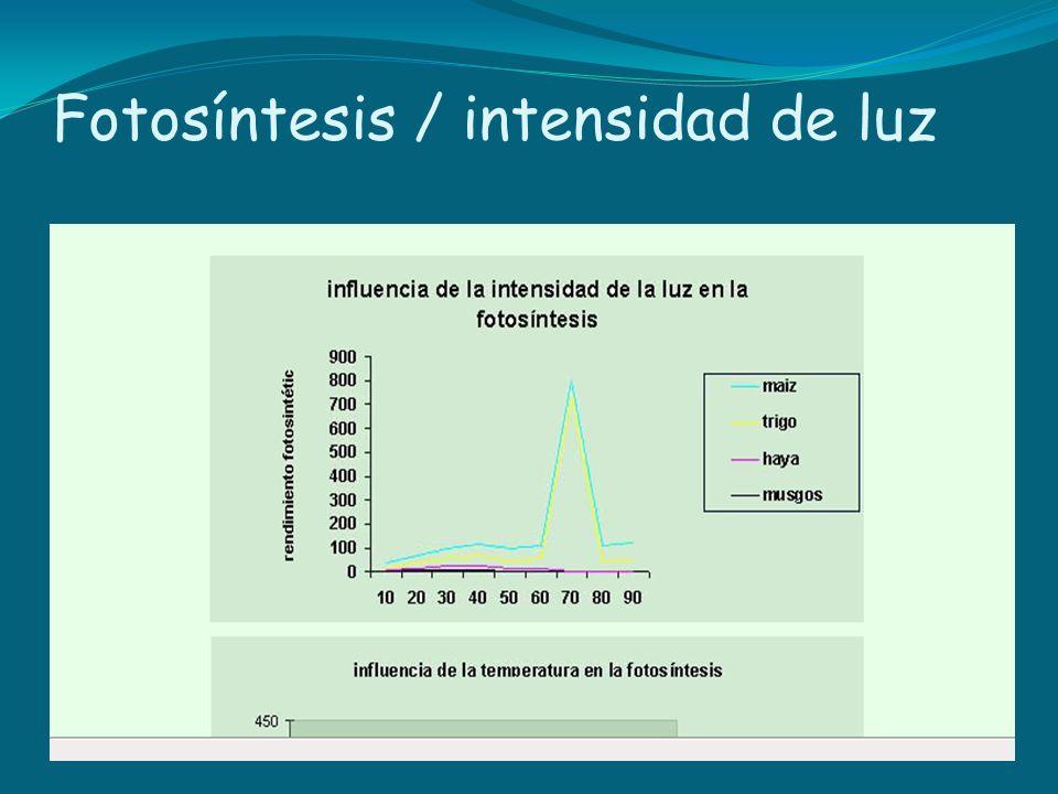 Fotosíntesis / intensidad de luz