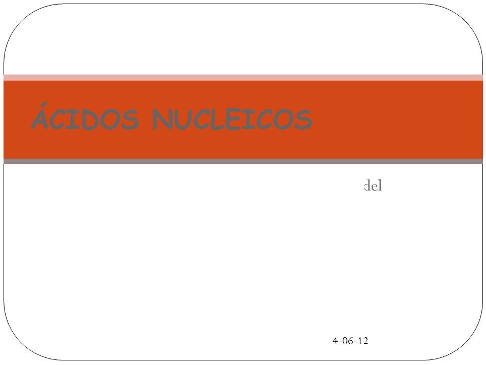 ÁCIDOS NUCLEICOS 4-06-12