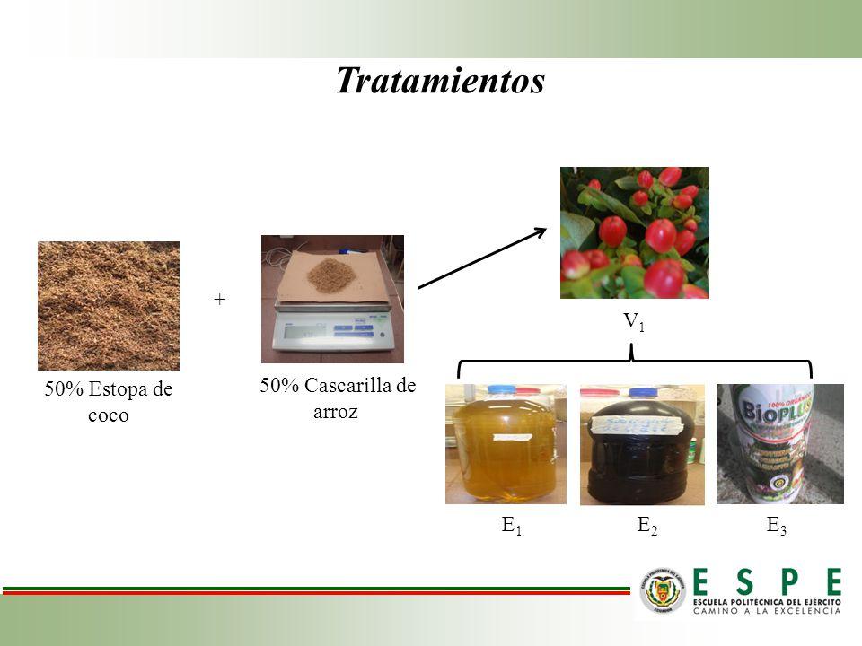 Tratamientos + V1 50% Estopa de coco 50% Cascarilla de arroz E1 E2 E3