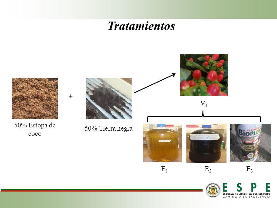 Tratamientos + V1 50% Estopa de coco 50% Tierra negra E1 E2 E3