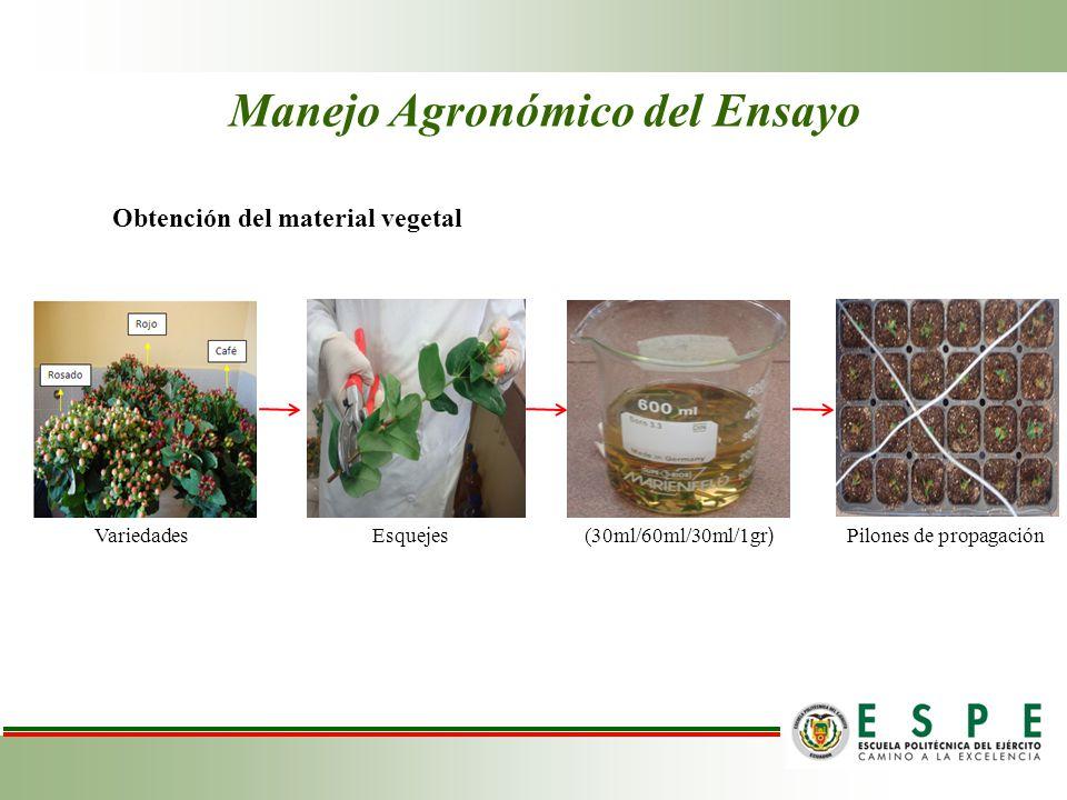 Manejo Agronómico del Ensayo Obtención del material vegetal