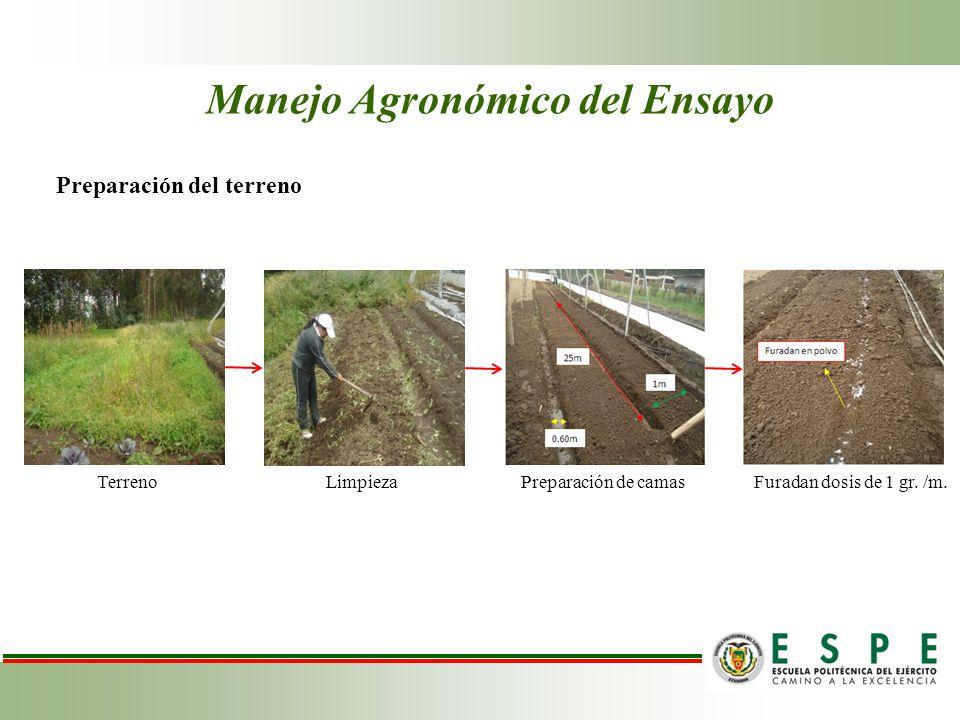 Manejo Agronómico del Ensayo Preparación del terreno