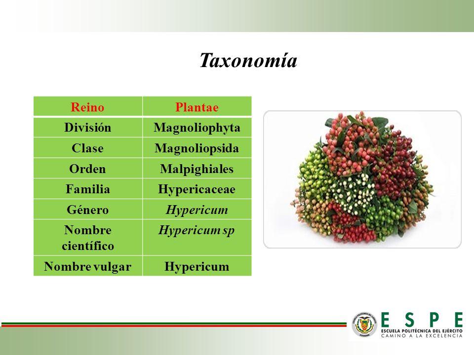 Taxonomía Reino Plantae División Magnoliophyta Clase Magnoliopsida