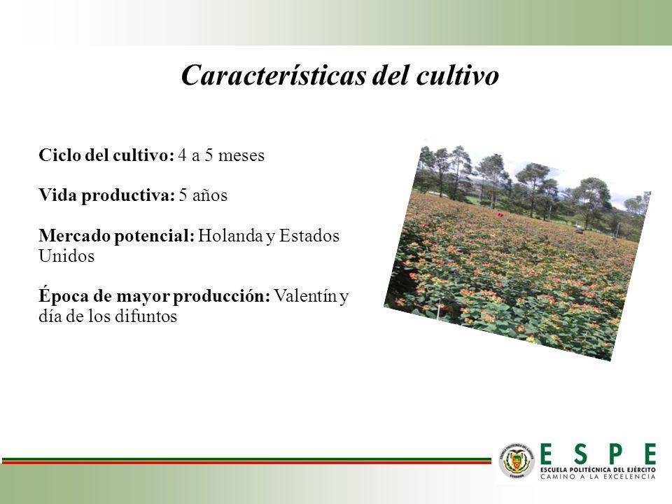Características del cultivo