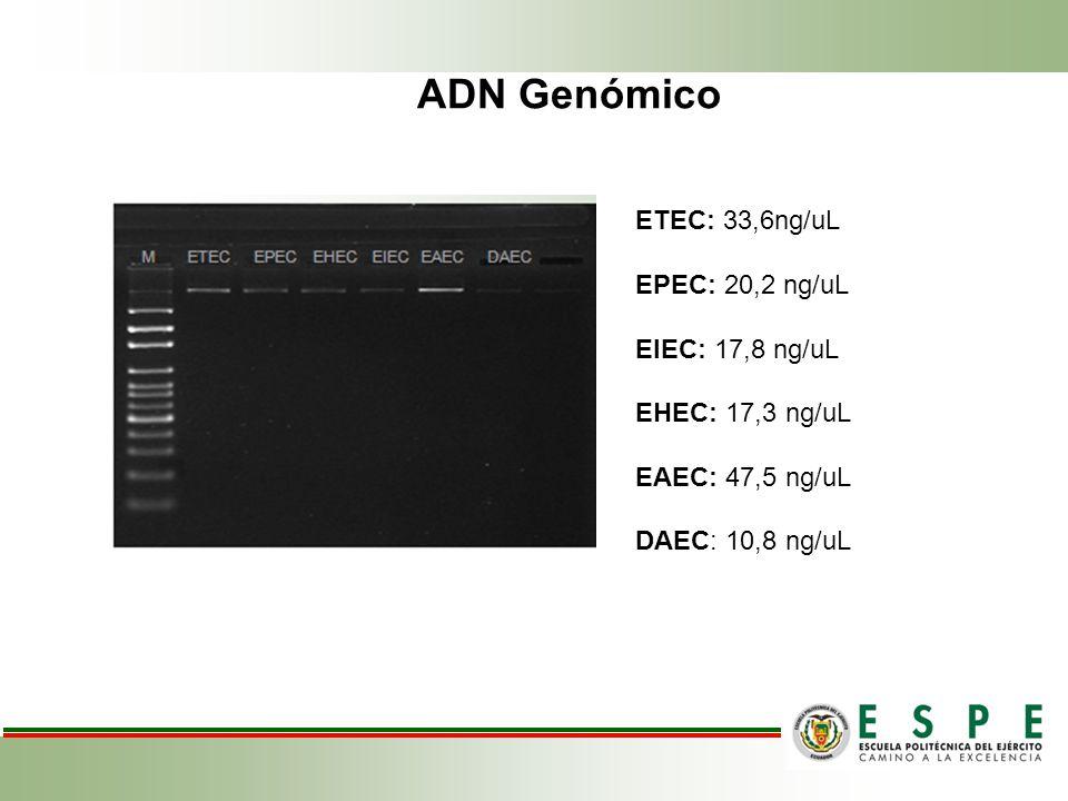 ADN Genómico ETEC: 33,6ng/uL EPEC: 20,2 ng/uL EIEC: 17,8 ng/uL