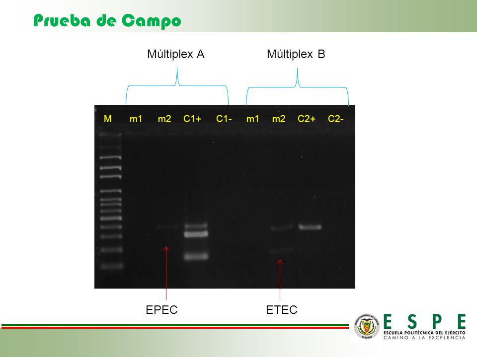 Prueba de Campo Múltiplex A Múltiplex B EPEC ETEC