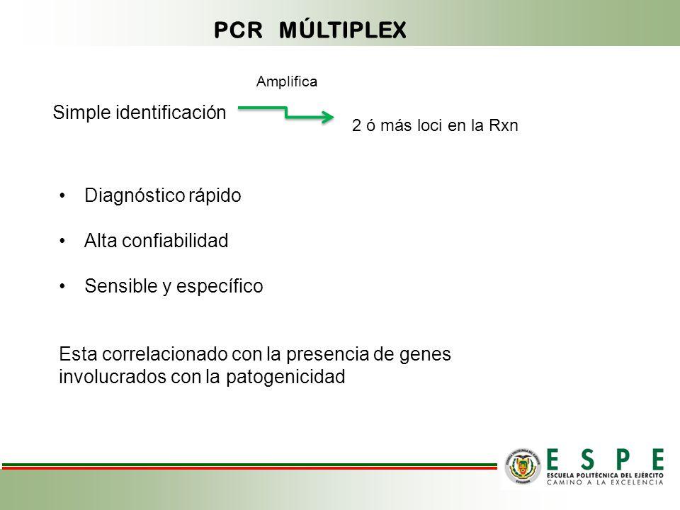 PCR MÚLTIPLEX Simple identificación Diagnóstico rápido