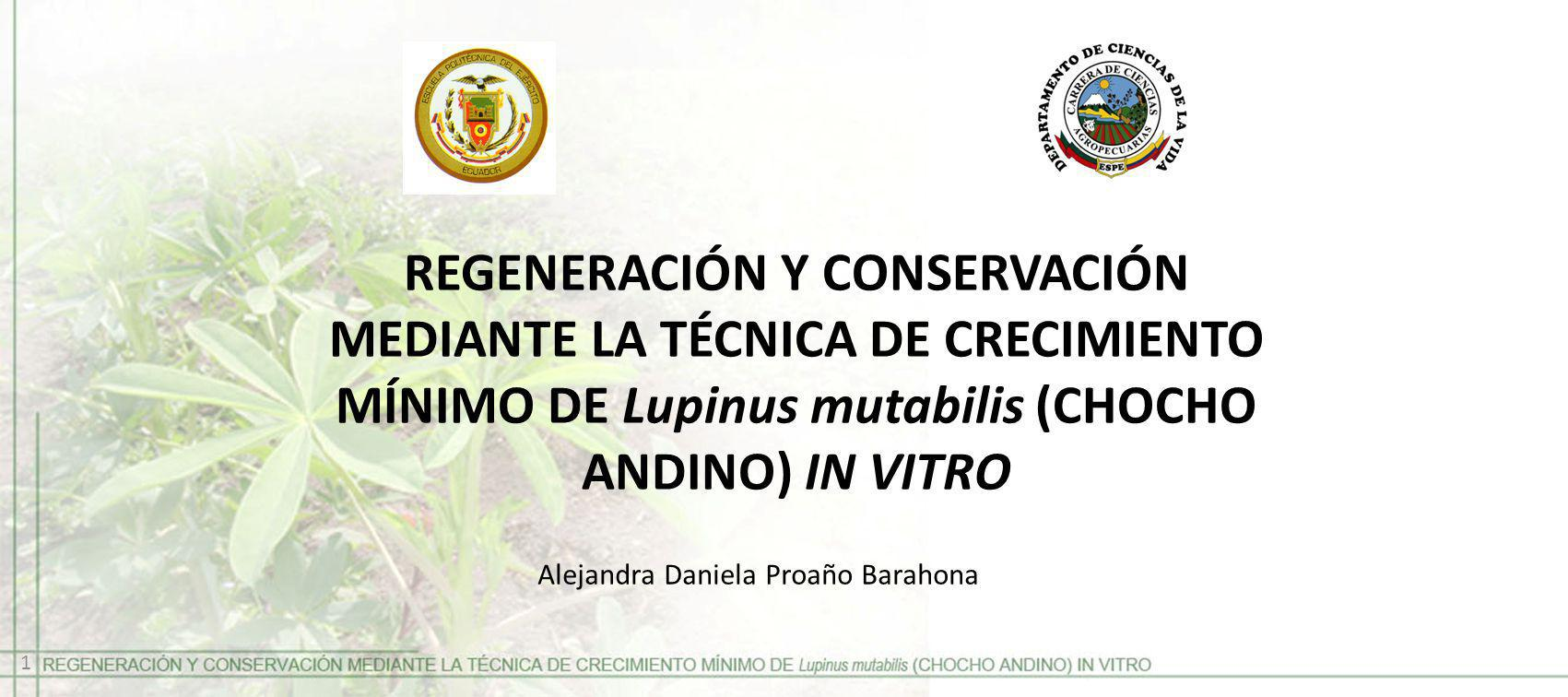 REGENERACIÓN Y CONSERVACIÓN MEDIANTE LA TÉCNICA DE CRECIMIENTO MÍNIMO DE Lupinus mutabilis (CHOCHO ANDINO) IN VITRO