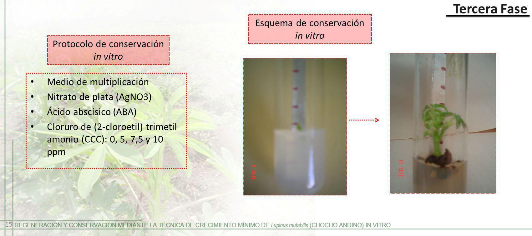 Esquema de conservación in vitro