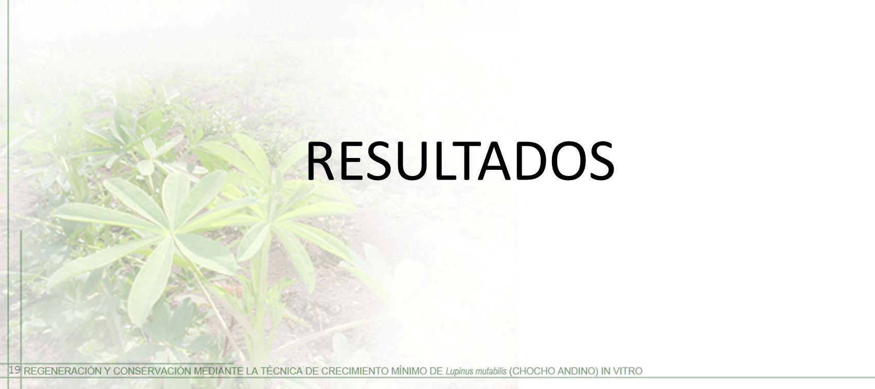 RESULTADOS 19