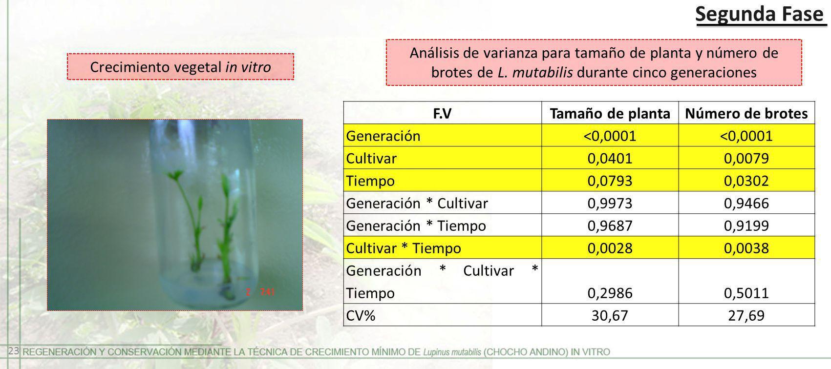 Crecimiento vegetal in vitro