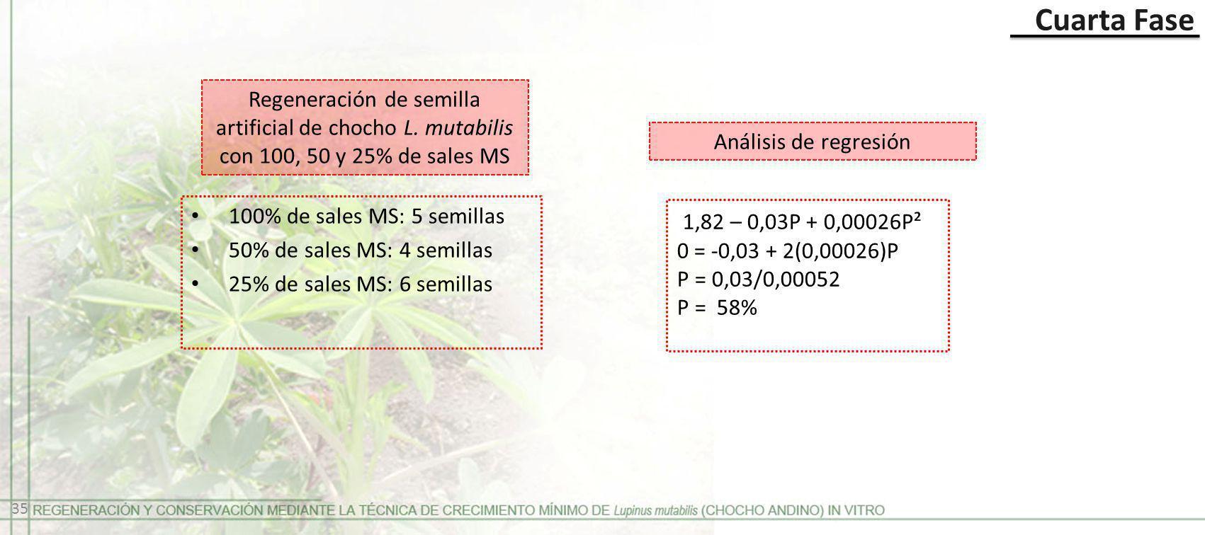 Cuarta Fase Regeneración de semilla artificial de chocho L. mutabilis con 100, 50 y 25% de sales MS.