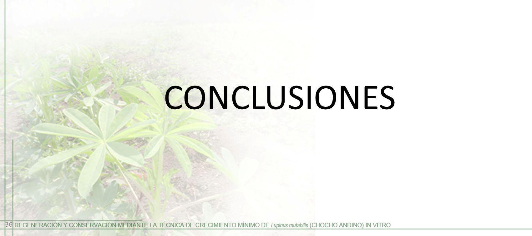 CONCLUSIONES 36