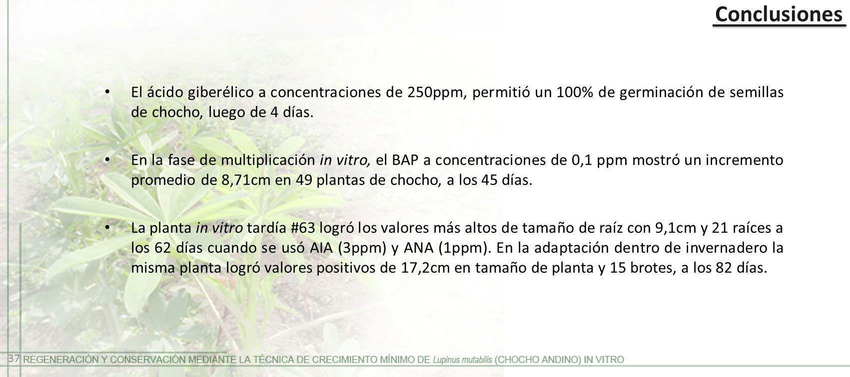 Conclusiones El ácido giberélico a concentraciones de 250ppm, permitió un 100% de germinación de semillas de chocho, luego de 4 días.