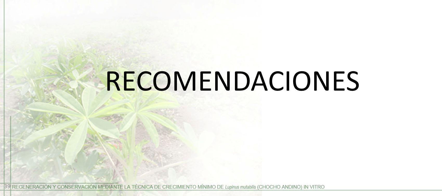 RECOMENDACIONES 39