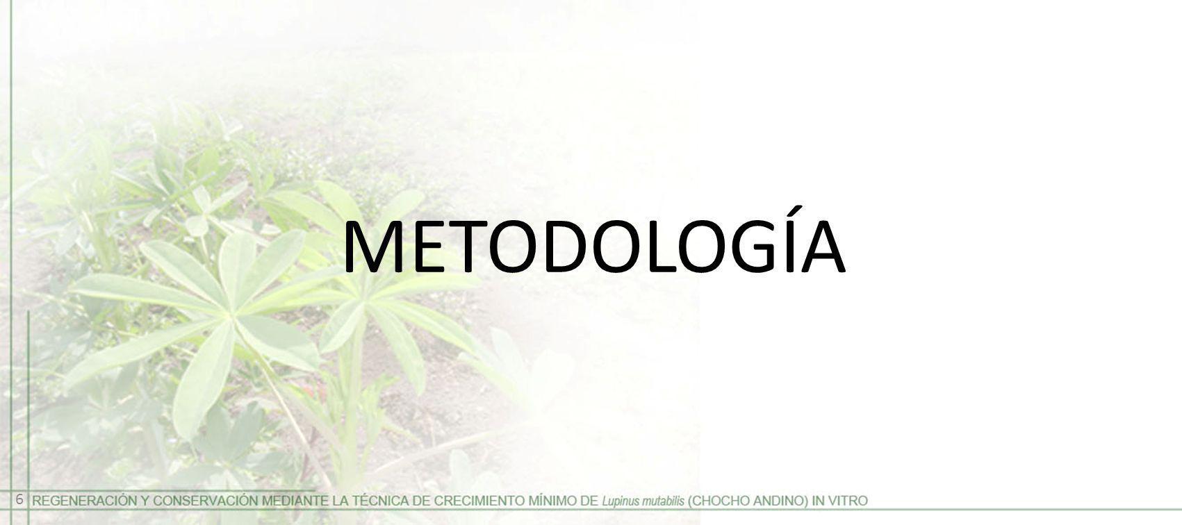 METODOLOGÍA 6