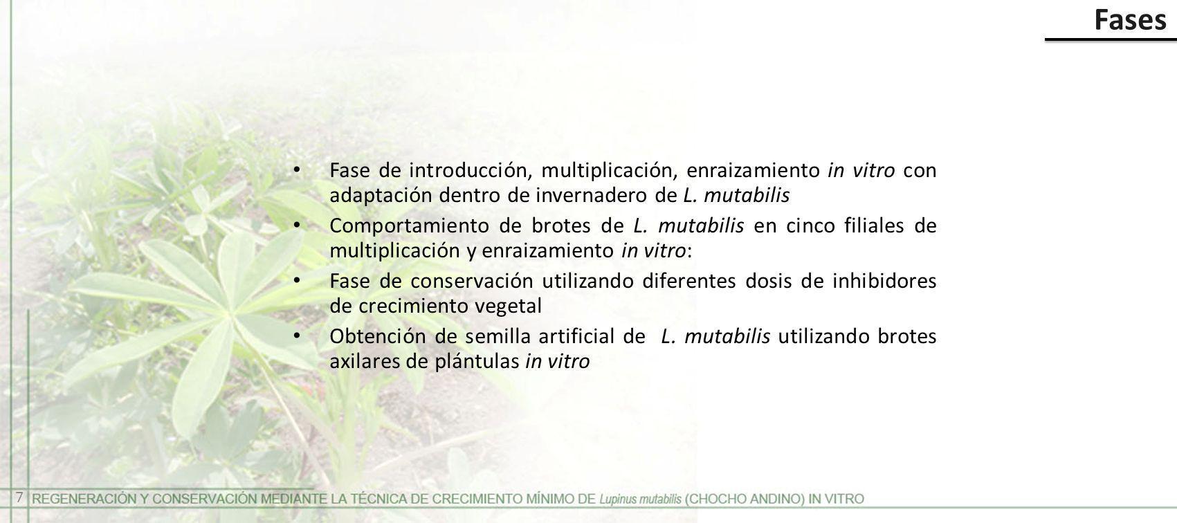 Fases Fase de introducción, multiplicación, enraizamiento in vitro con adaptación dentro de invernadero de L. mutabilis.