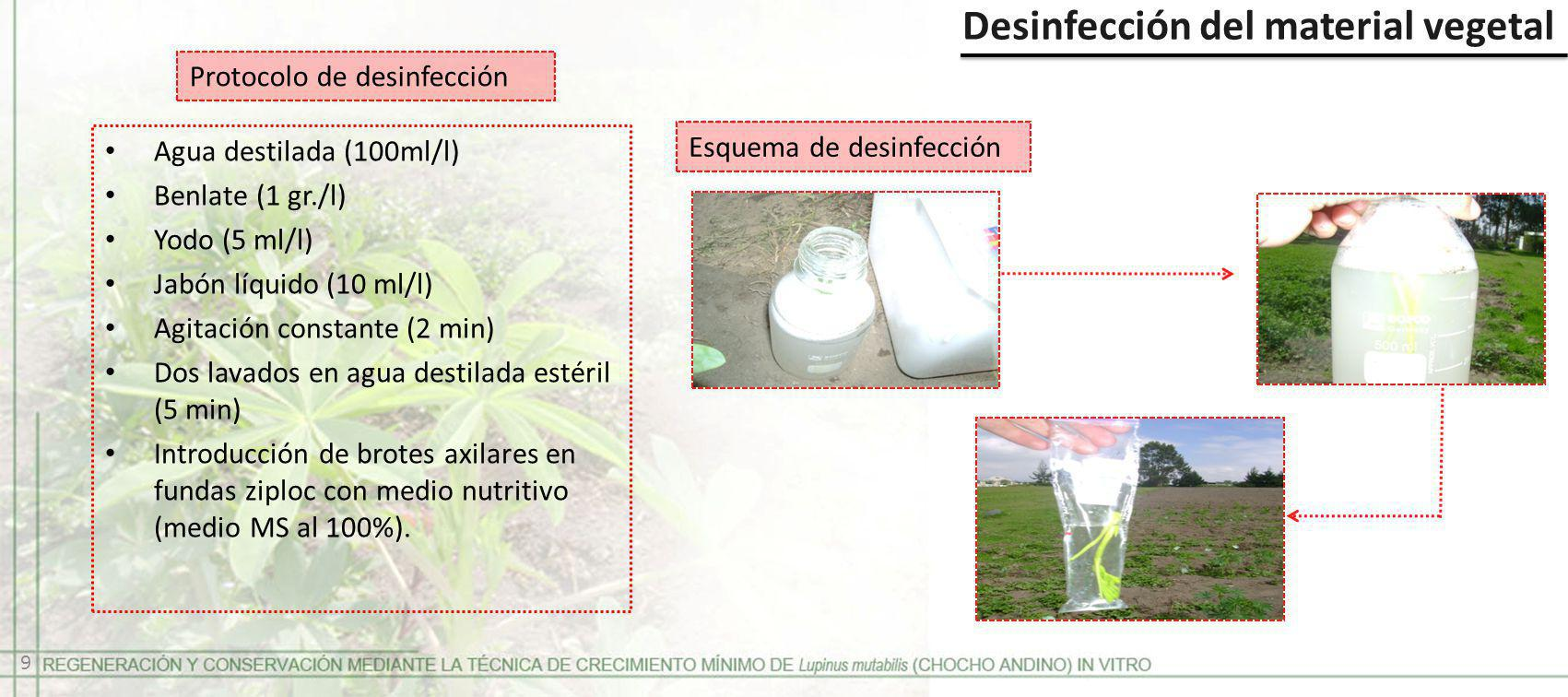 Desinfección del material vegetal