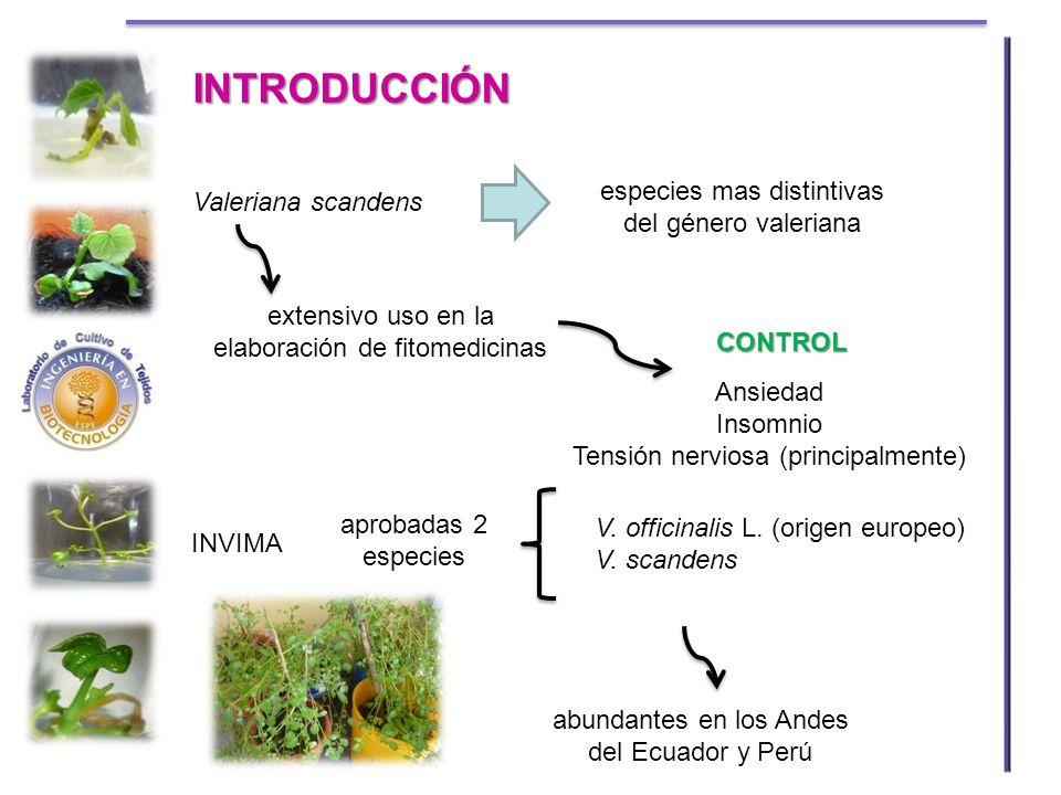 INTRODUCCIÓN especies mas distintivas del género valeriana
