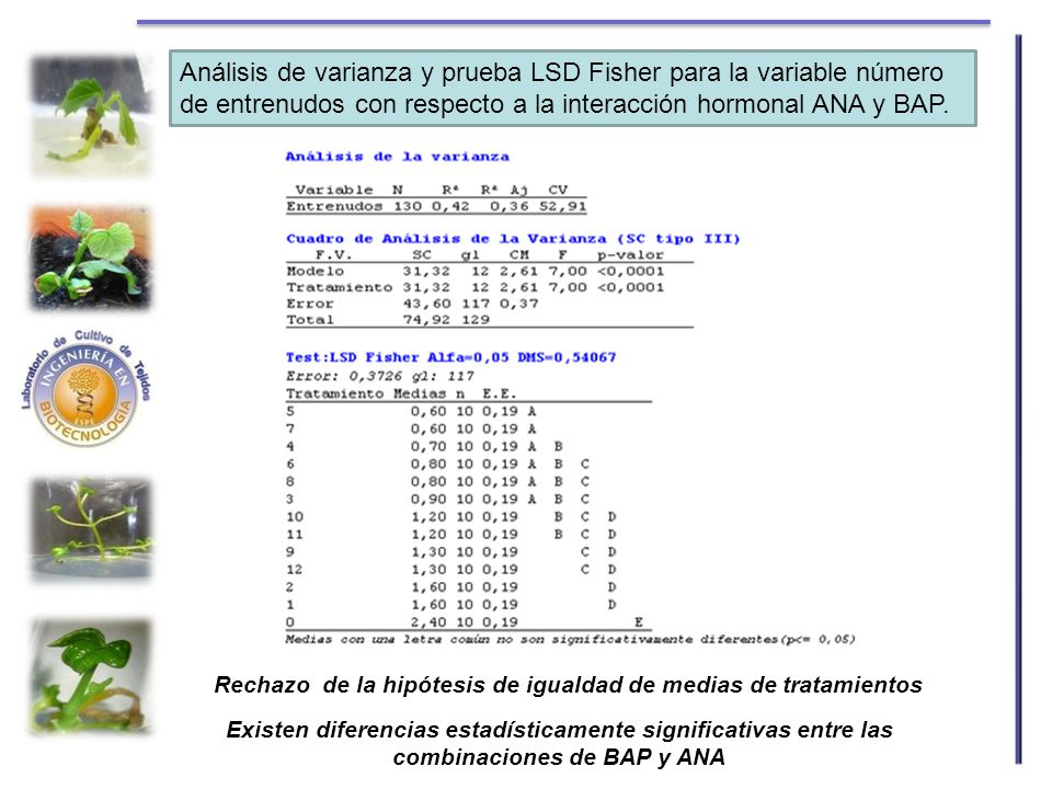 Análisis de varianza y prueba LSD Fisher para la variable número de entrenudos con respecto a la interacción hormonal ANA y BAP.