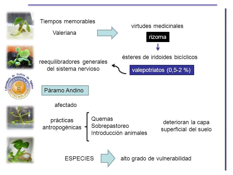 ésteres de iridoides bicíclicos