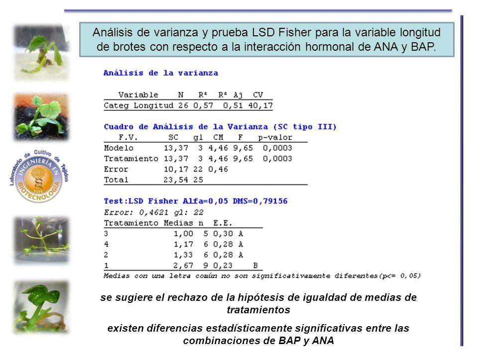 Análisis de varianza y prueba LSD Fisher para la variable longitud de brotes con respecto a la interacción hormonal de ANA y BAP.