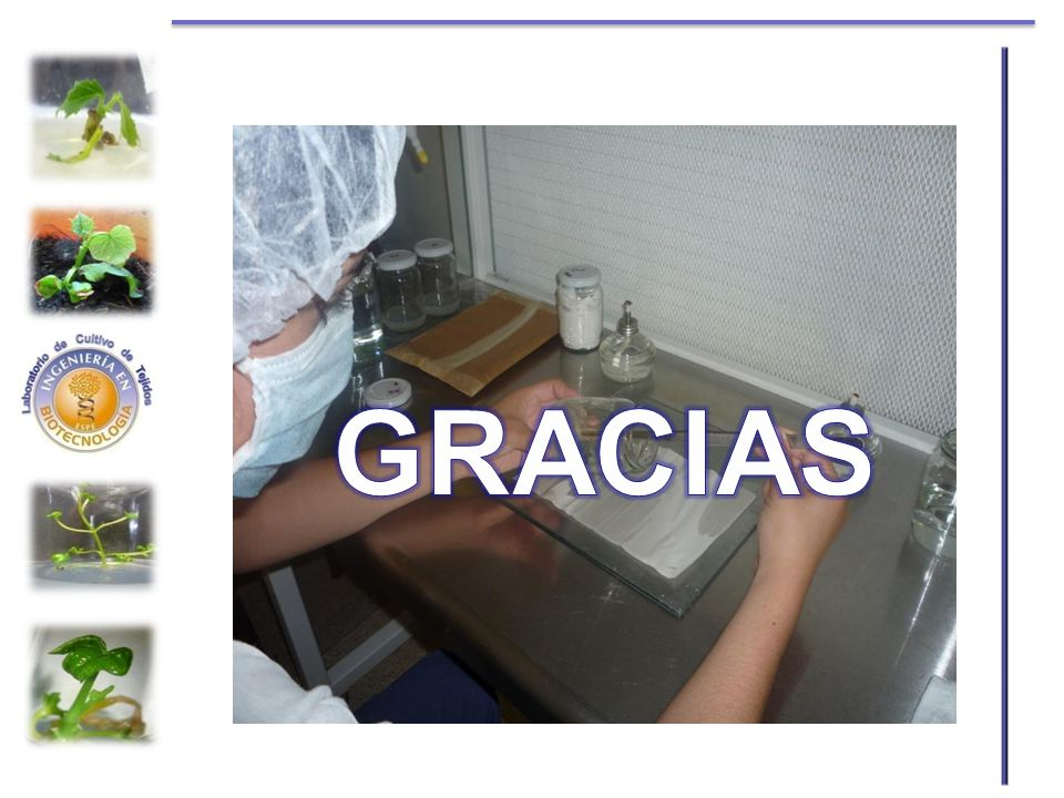 GRACIAS