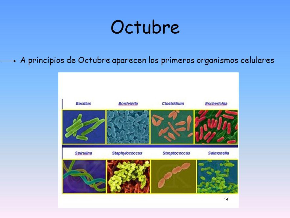 Octubre A principios de Octubre aparecen los primeros organismos celulares