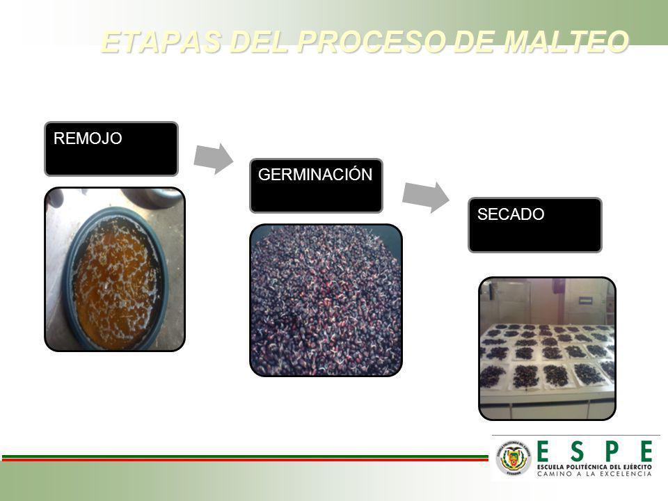 ETAPAS DEL PROCESO DE MALTEO