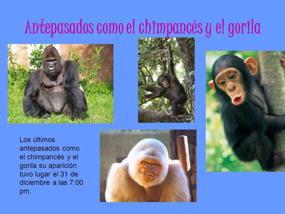 Antepasados como el chimpancés y el gorila