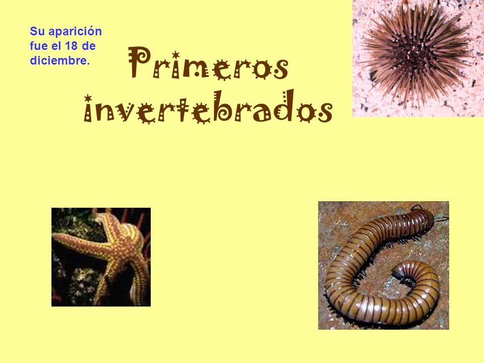 Primeros invertebrados