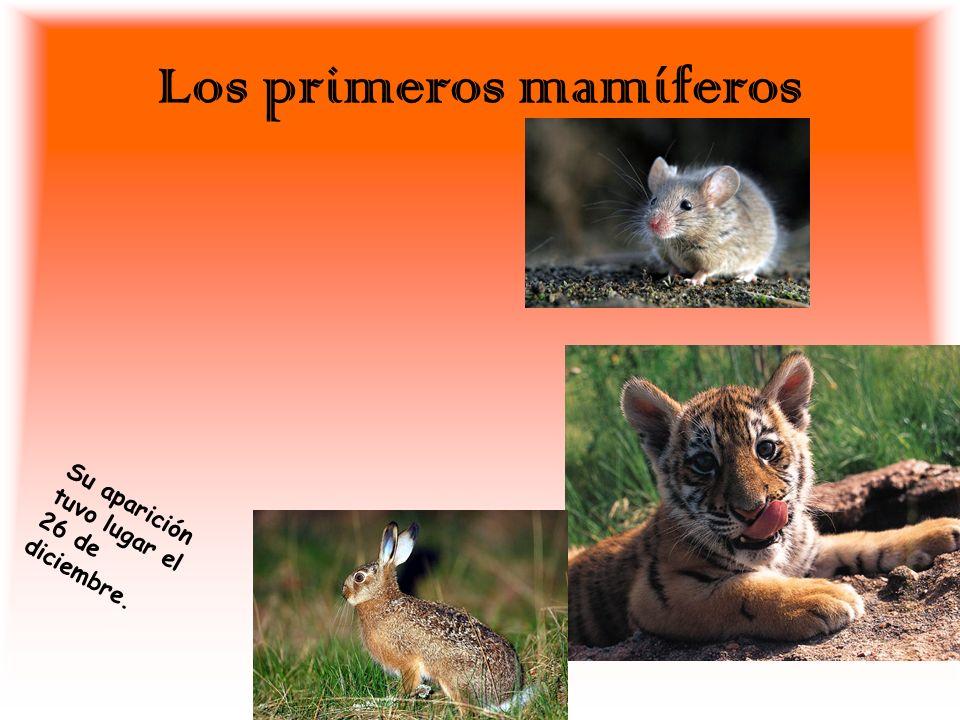 Los primeros mamíferos