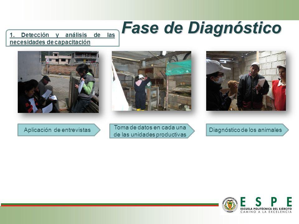 Fase de Diagnóstico 1. Detección y análisis de las necesidades de capacitación. Aplicación de entrevistas.