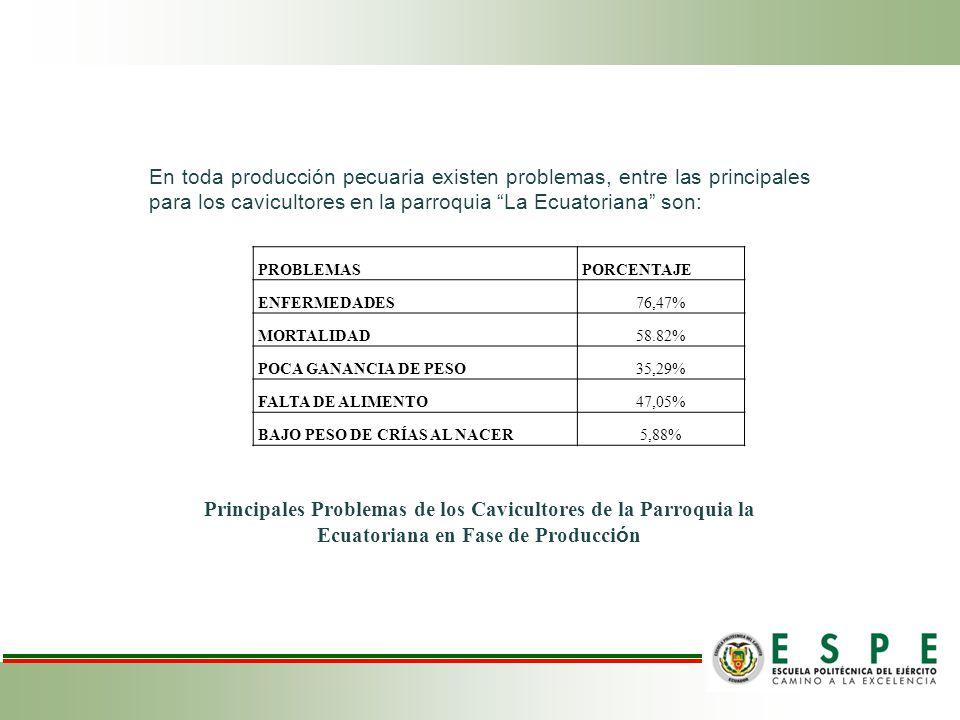 En toda producción pecuaria existen problemas, entre las principales para los cavicultores en la parroquia La Ecuatoriana son: