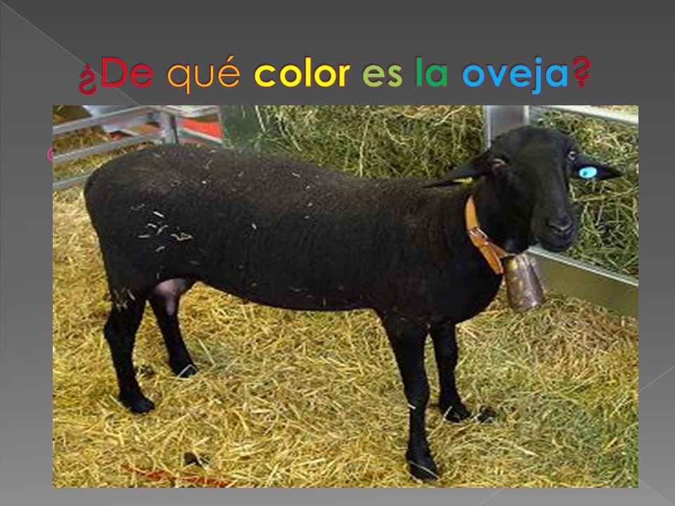 ¿De qué color es la oveja