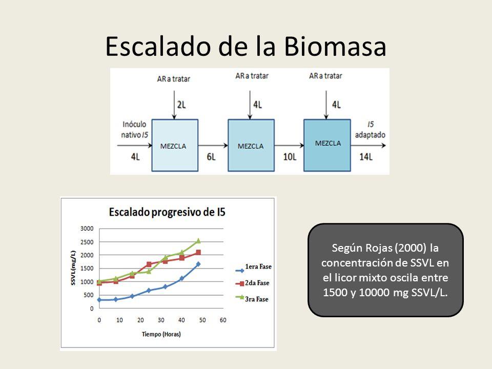 Escalado de la Biomasa Según Rojas (2000) la concentración de SSVL en el licor mixto oscila entre 1500 y 10000 mg SSVL/L.