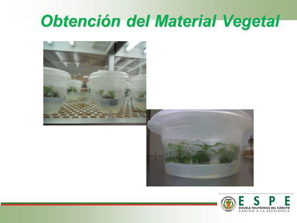 Obtención del Material Vegetal