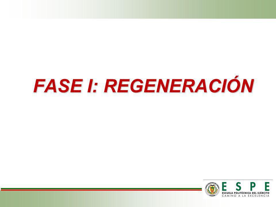 FASE I: REGENERACIÓN