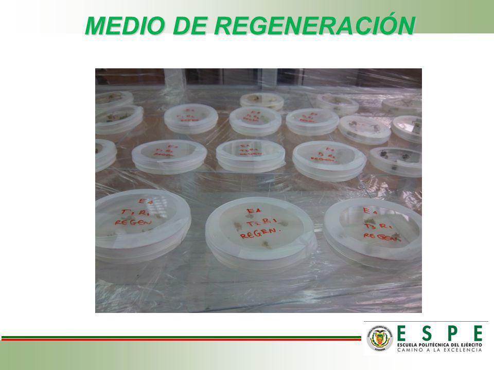 MEDIO DE REGENERACIÓN
