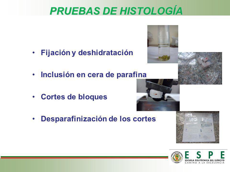 PRUEBAS DE HISTOLOGÍA Fijación y deshidratación