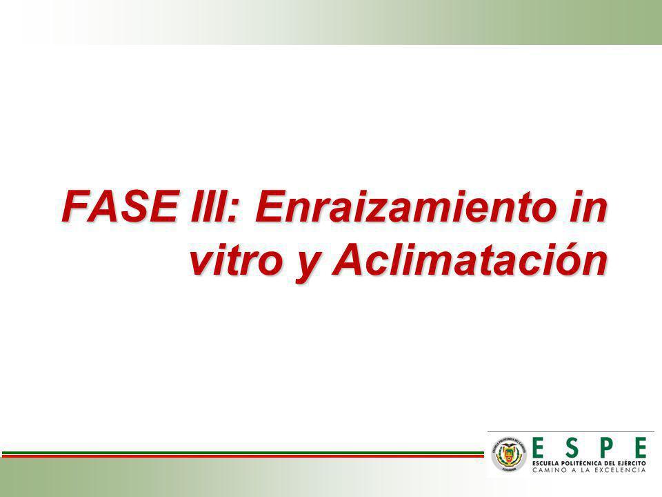 FASE III: Enraizamiento in vitro y Aclimatación