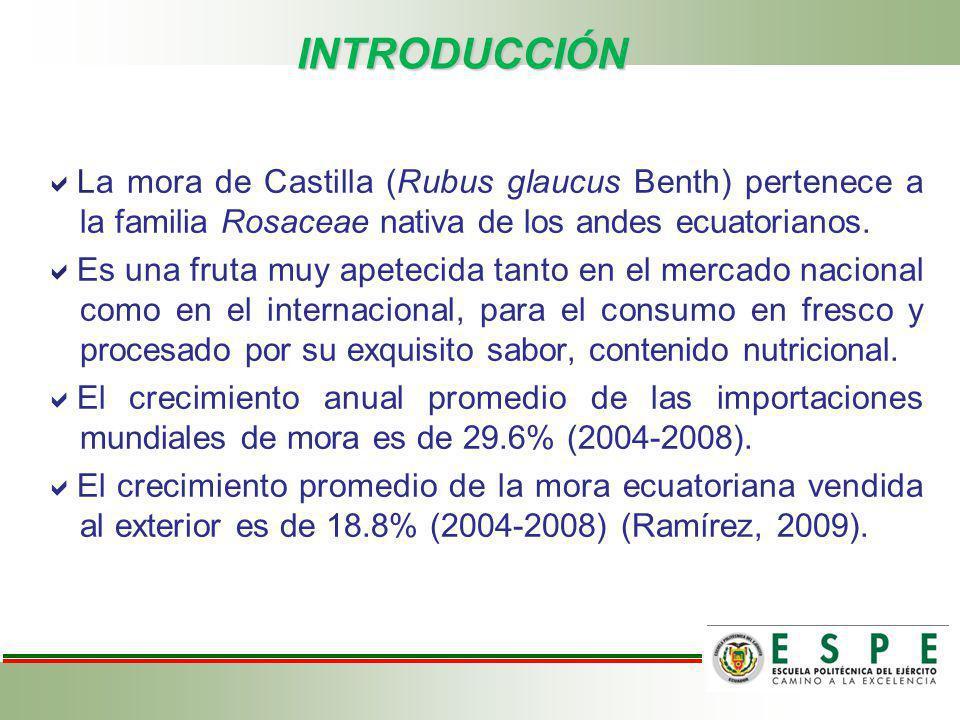 INTRODUCCIÓN La mora de Castilla (Rubus glaucus Benth) pertenece a la familia Rosaceae nativa de los andes ecuatorianos.