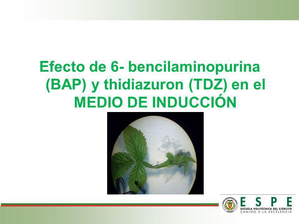 Efecto de 6- bencilaminopurina (BAP) y thidiazuron (TDZ) en el MEDIO DE INDUCCIÓN