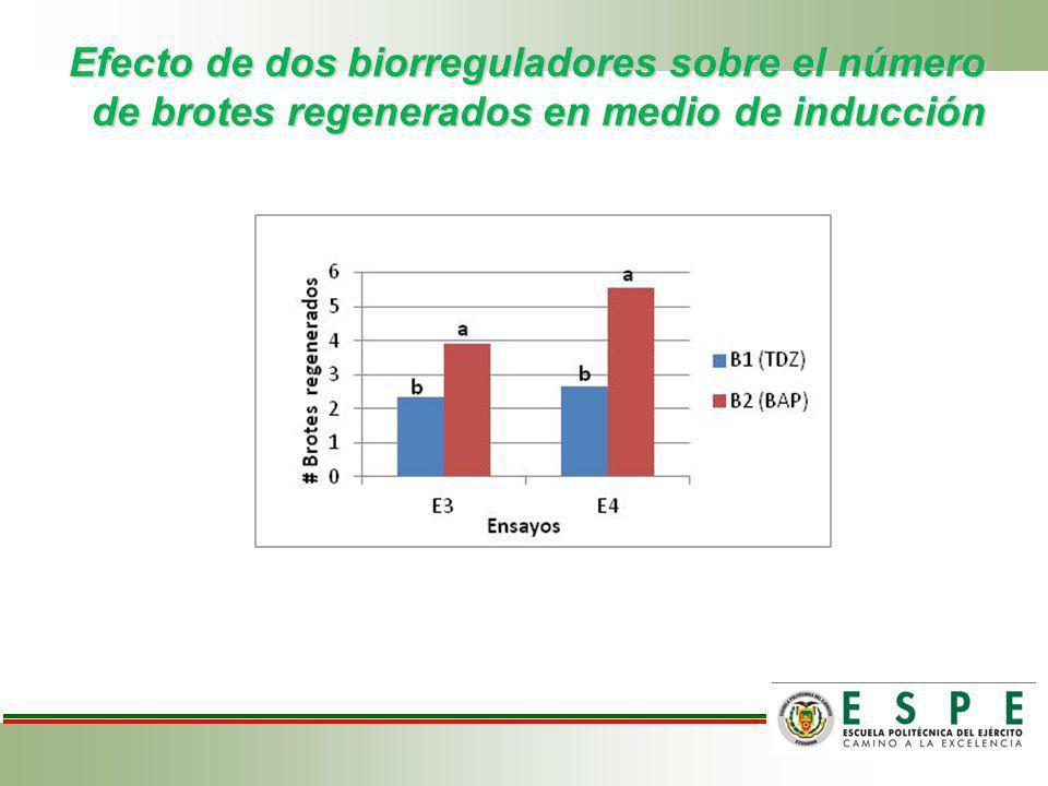 Efecto de dos biorreguladores sobre el número de brotes regenerados en medio de inducción
