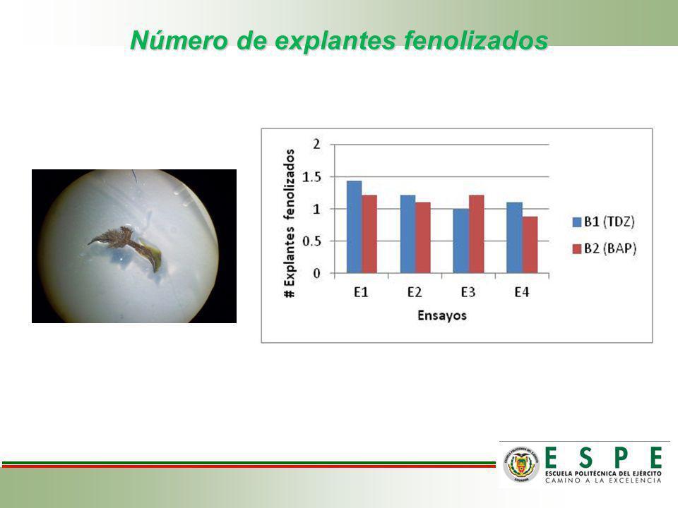 Número de explantes fenolizados