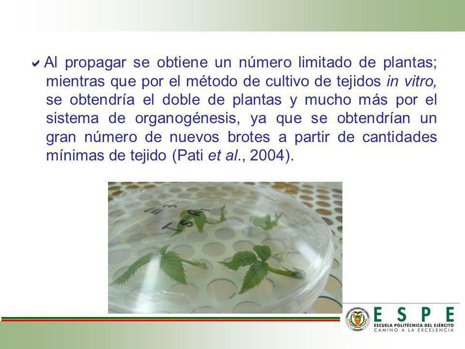 Al propagar se obtiene un número limitado de plantas; mientras que por el método de cultivo de tejidos in vitro, se obtendría el doble de plantas y mucho más por el sistema de organogénesis, ya que se obtendrían un gran número de nuevos brotes a partir de cantidades mínimas de tejido (Pati et al., 2004).