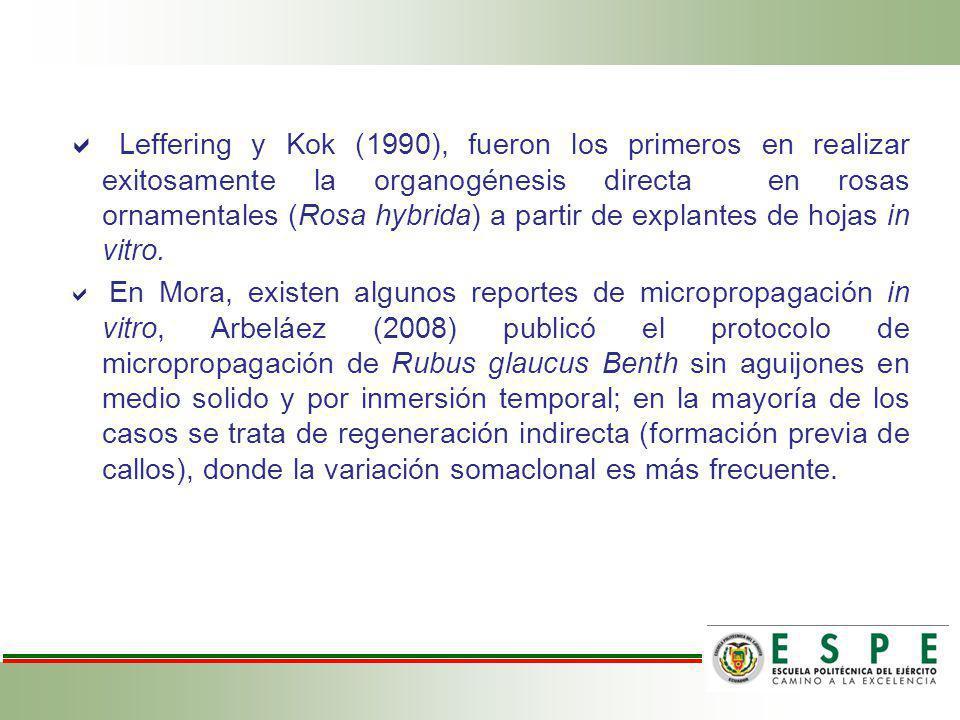  Leffering y Kok (1990), fueron los primeros en realizar exitosamente la organogénesis directa en rosas ornamentales (Rosa hybrida) a partir de explantes de hojas in vitro.
